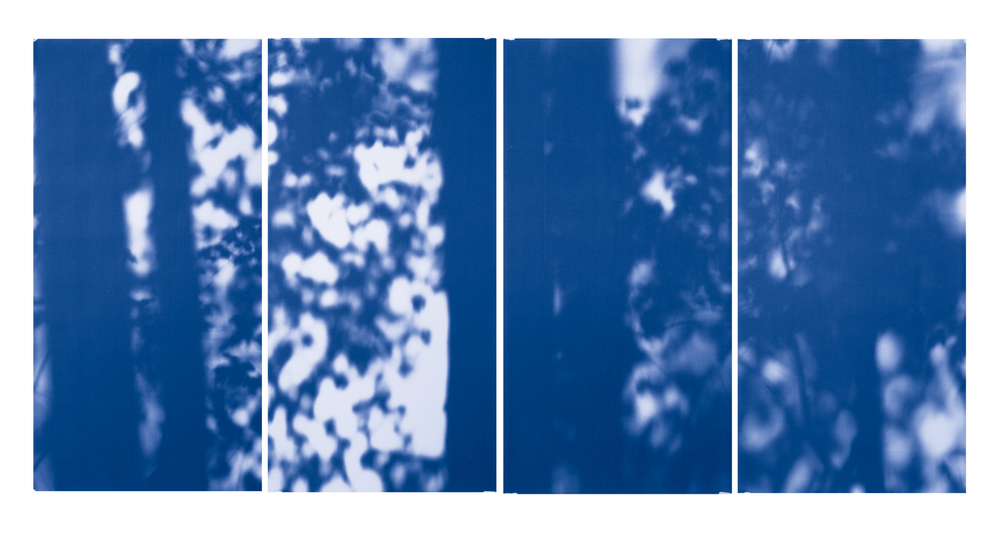 Blue Line of Woods #770, 2012