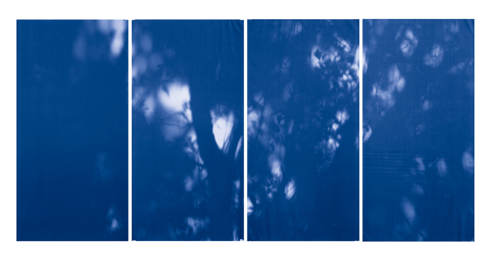 Blue Line of Woods #993, 2012