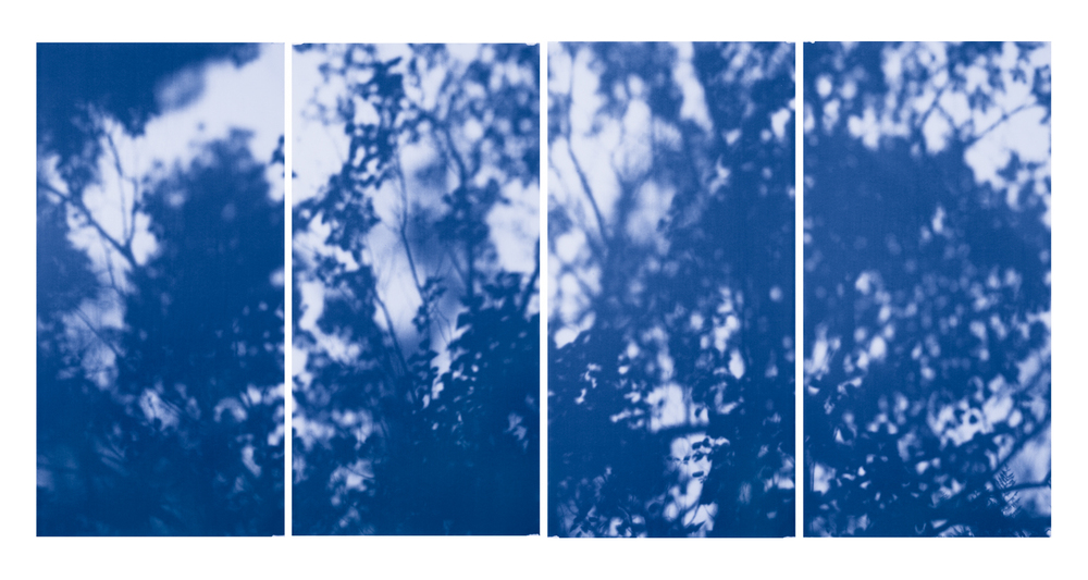 Blue Line of Woods #915, 2012