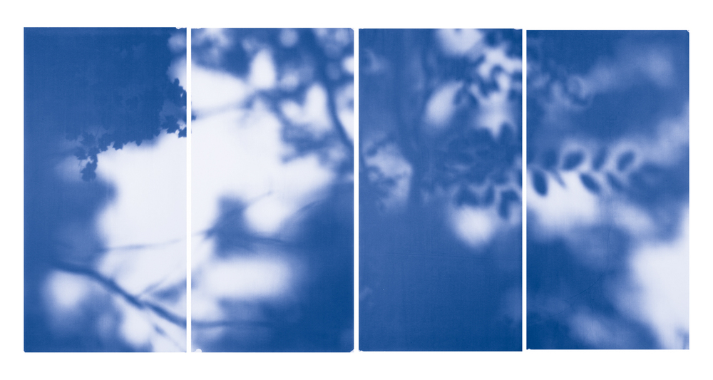 Blue Line of Woods #524, 2012