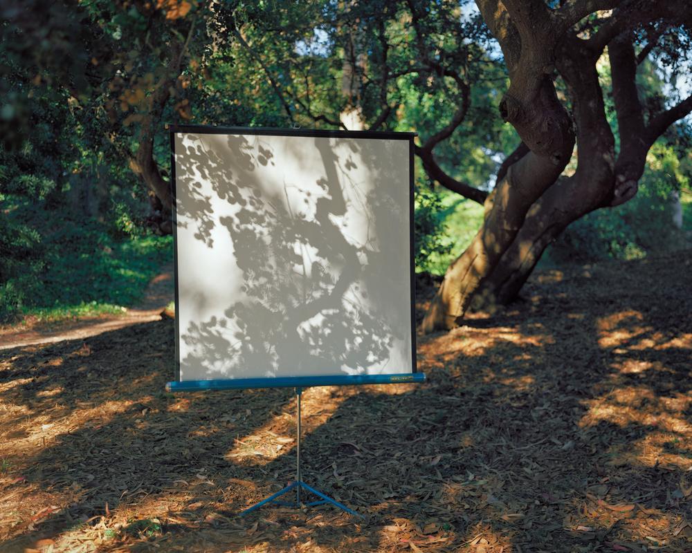 Golden Gate Park #7, 2011
