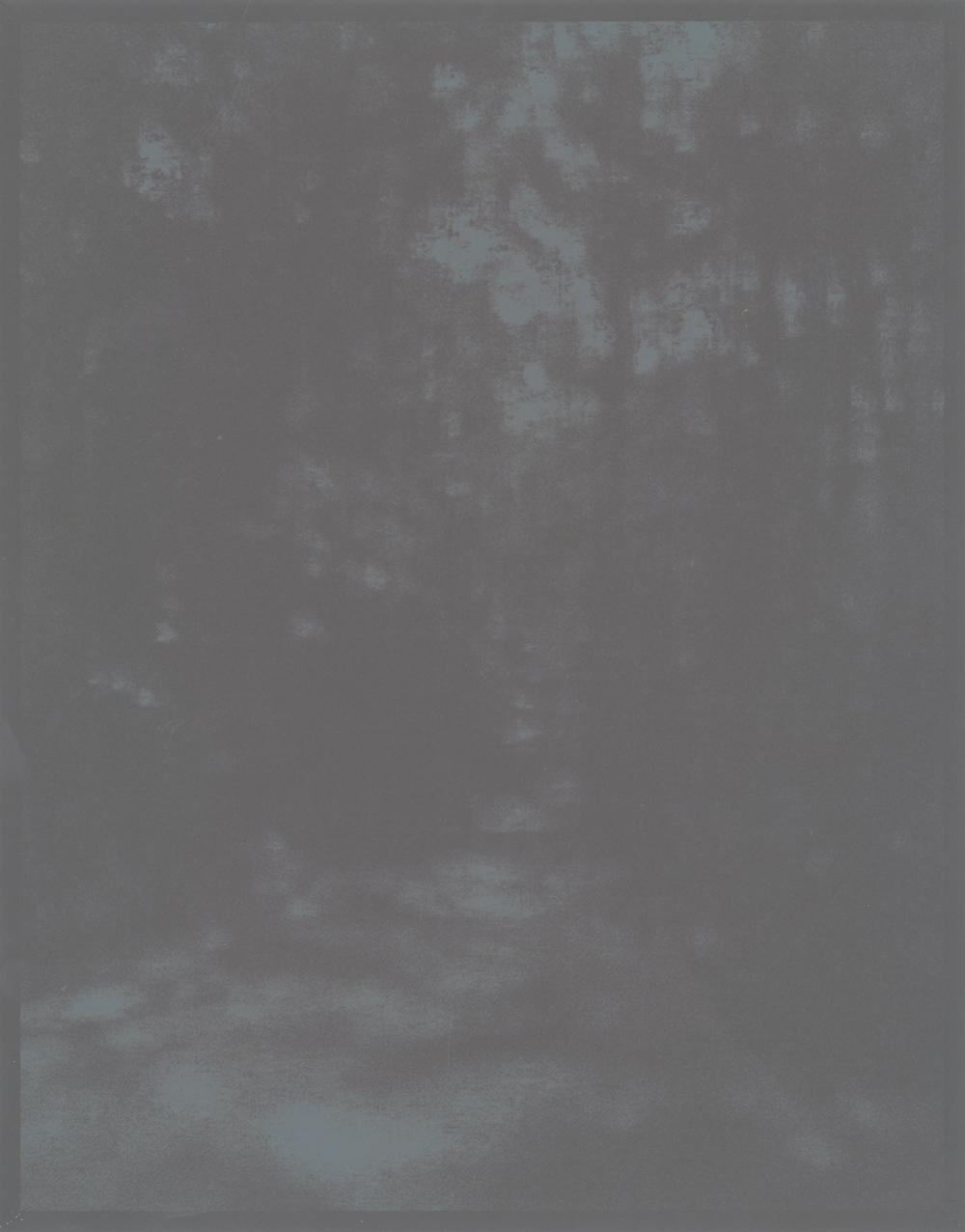 Rayko-fadingwoods02.jpg