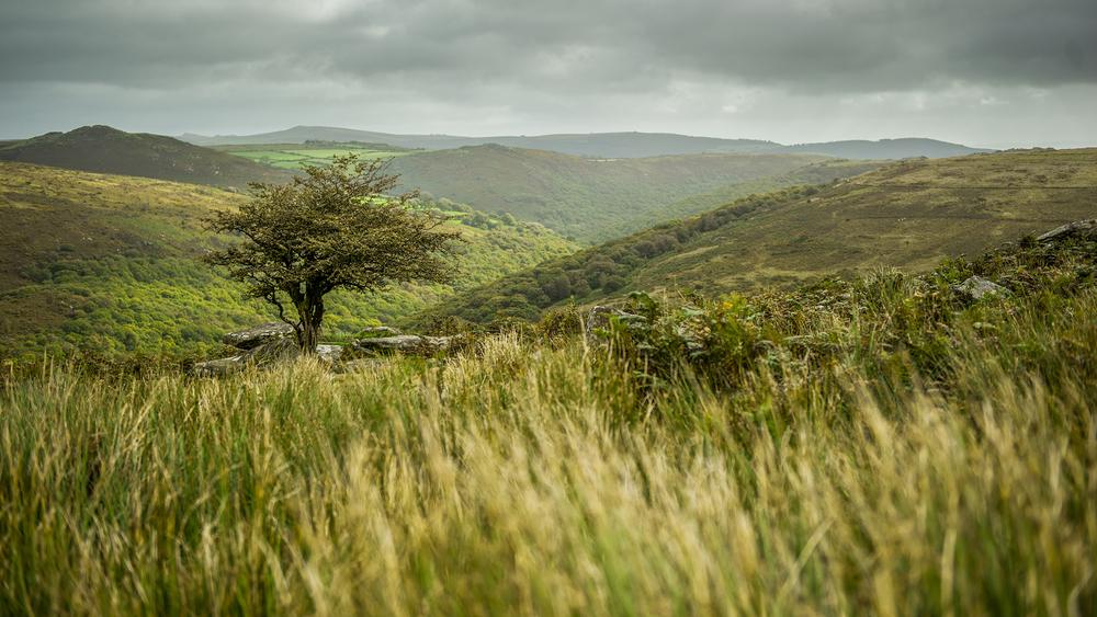 Top of Dartmoor