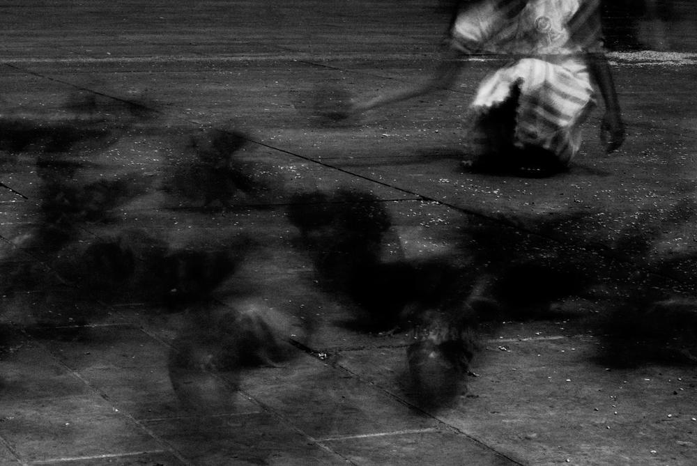 The Pigeons of Trafalgar Square