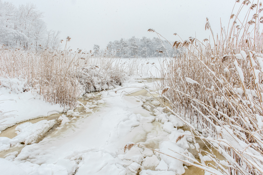Snowy Salt Marshes