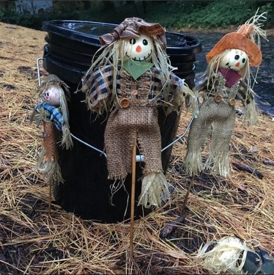Scarecrows and Bucket.jpg