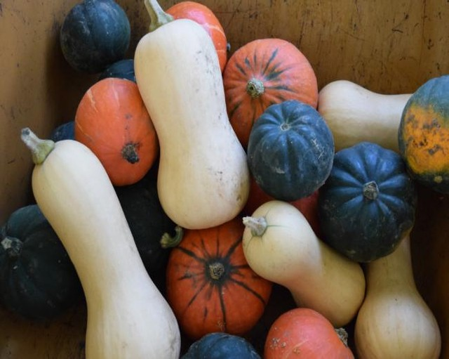 Join us for the FINAL outdoor market of 2018 - this Sat 11/17 10AM-2PM. Swing by to stock up on all of your Thanksgiving needs, like these beautiful squash :)