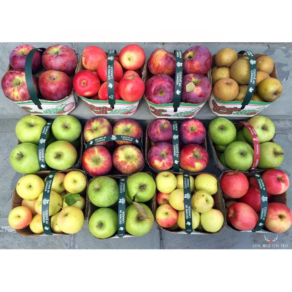 This is what a bushel of apples looks like! Picked up these incredibly vibrant local beauties from Bizjak Farms at the Evergreen Brick Works Farmers' Market!
