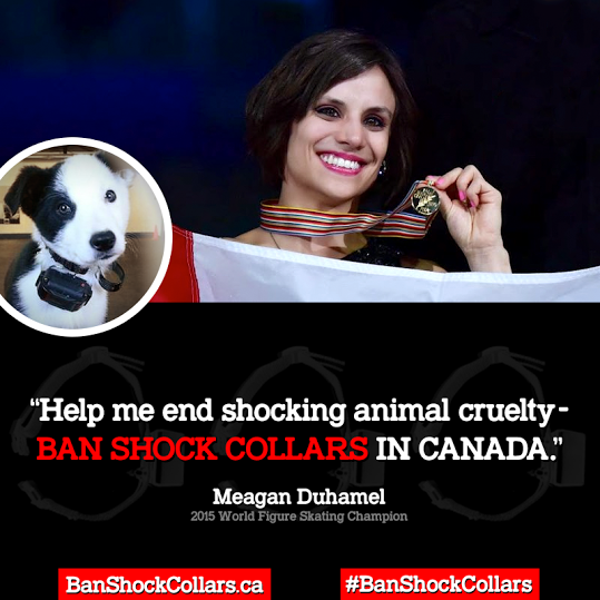 The Canadian campaign to Ban Shock Collars has received support from 2015 World Figure Skating Champion, Meagan Duhamel and Dr. David Suzuki, who both star in public service announcements calling on fellow Canadians to support a ban on shock collars.