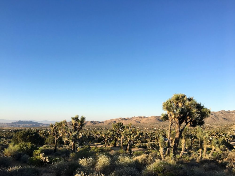 {on a quick trip to Joshua Tree last June}
