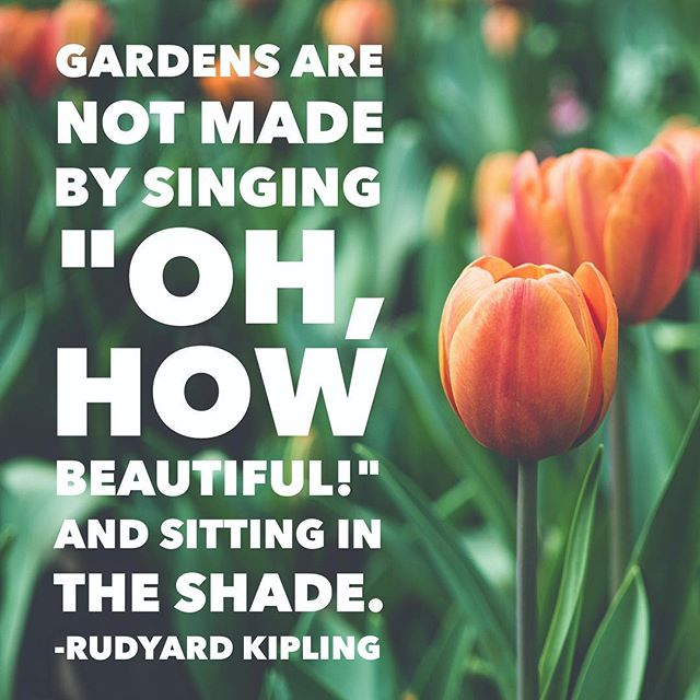 Do the work. Everything else will follow... . . #TAA #qotd #hardwork #quotestoliveby #rudyardkipling #gardening #dothework #gettowork #positivity #positiveaction #resist #bethechange #standup