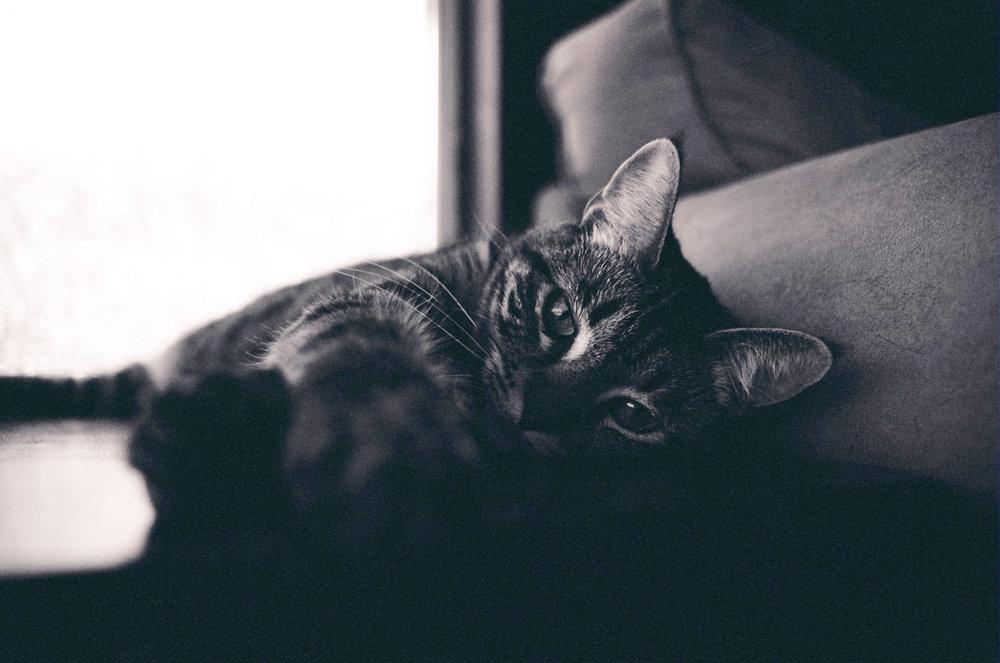 Nap Cat.JPG