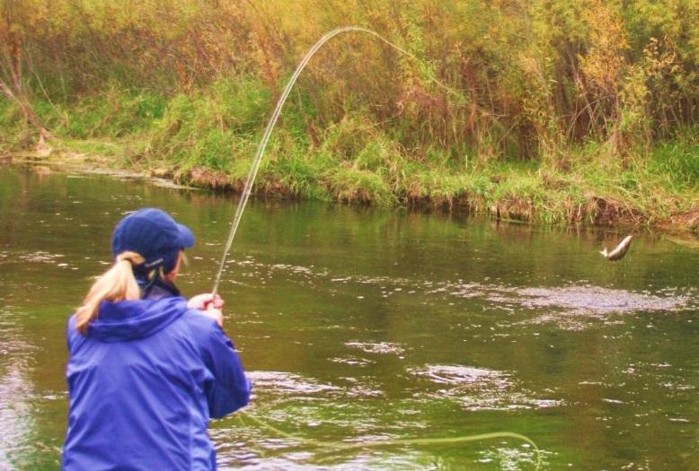 trout jump.jpg