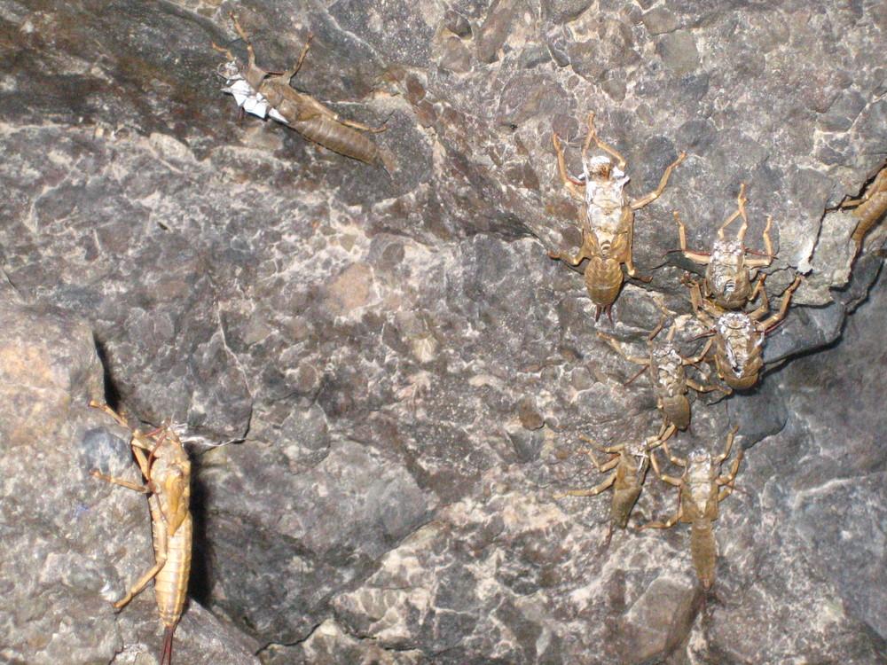 salmonflies 07 047.jpg