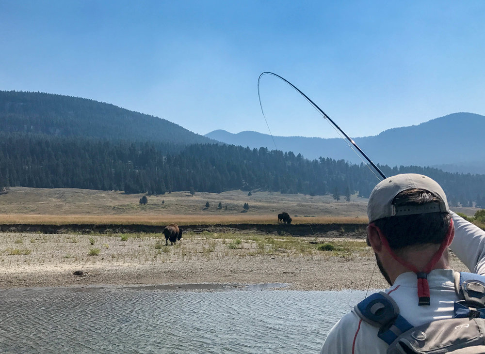 A rare summer day off to fish with the buffalo in YNP.