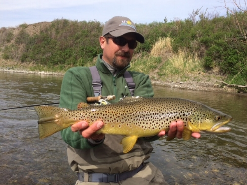 Missouri-River-brown-trout