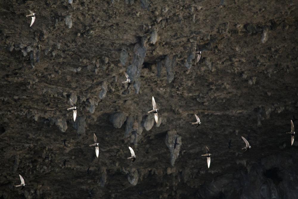 birds1-7068.jpg