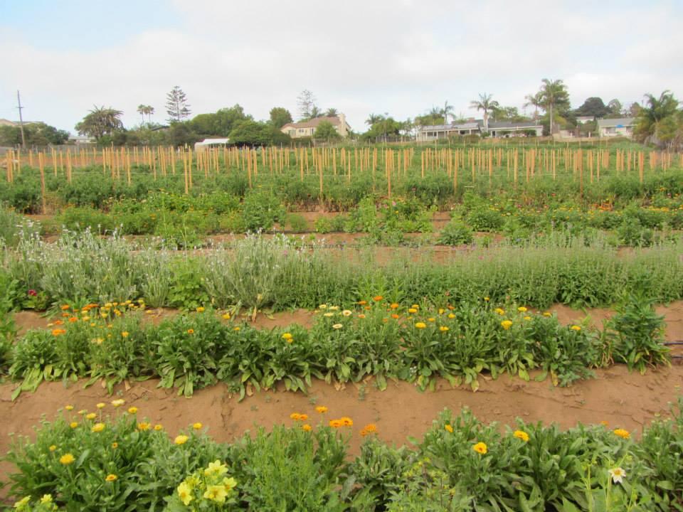 farm1.jpeg