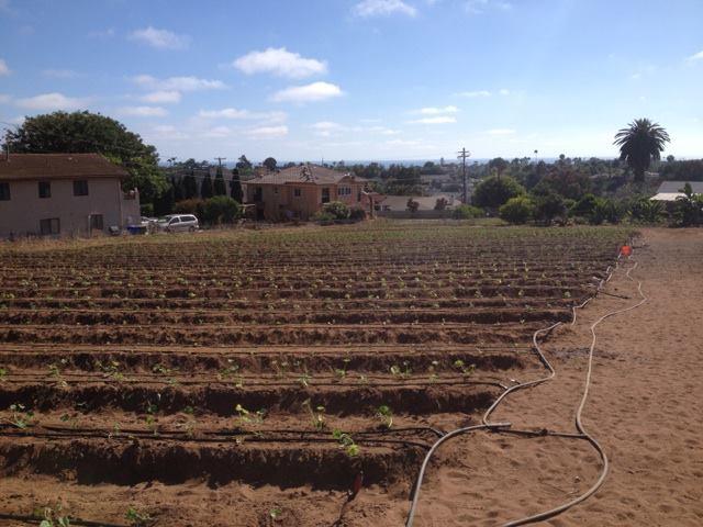 farm2.jpeg