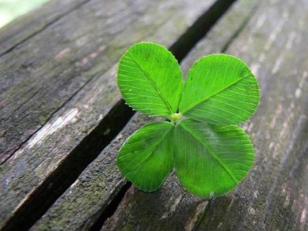 lucky-four-leaf-clover.jpg