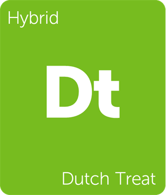 dutch treat.png