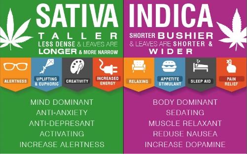 cannabis-infographic.jpg