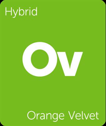 orangevelvet.png