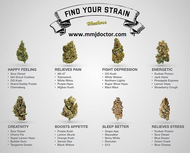 top-medical-and-recreational-marijuana-strains-in-2017.jpg