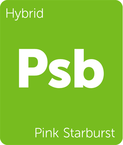 pink starburst.png