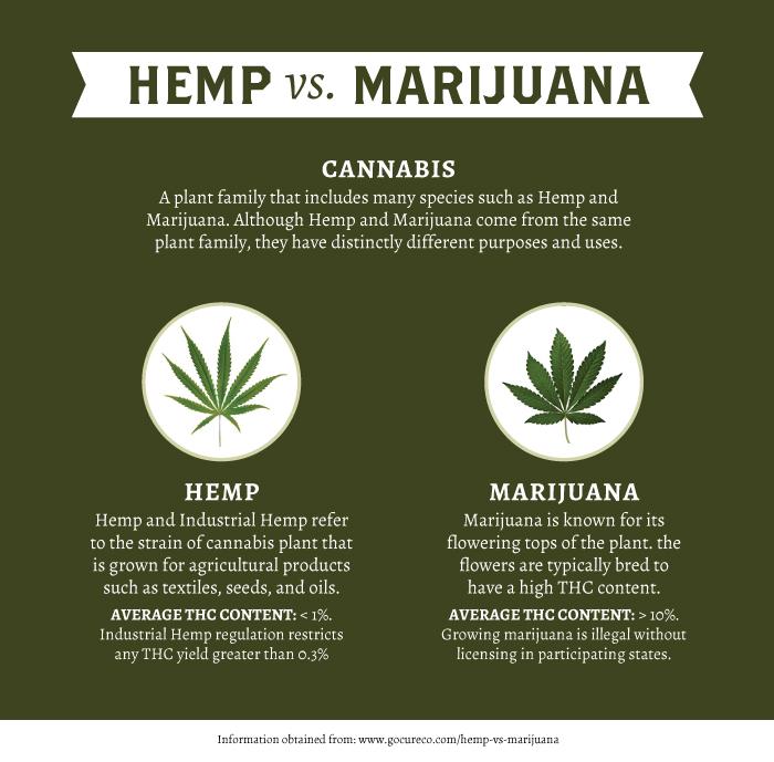 Hemp-vs-Marijuana2.jpg