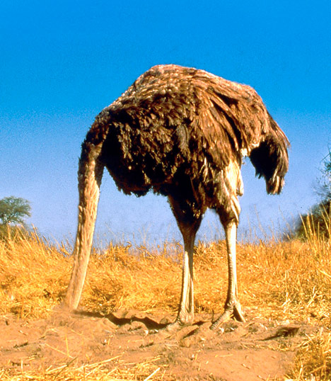 No, ostriches don't really bury their heads in the sand. Parents shouldn't either.