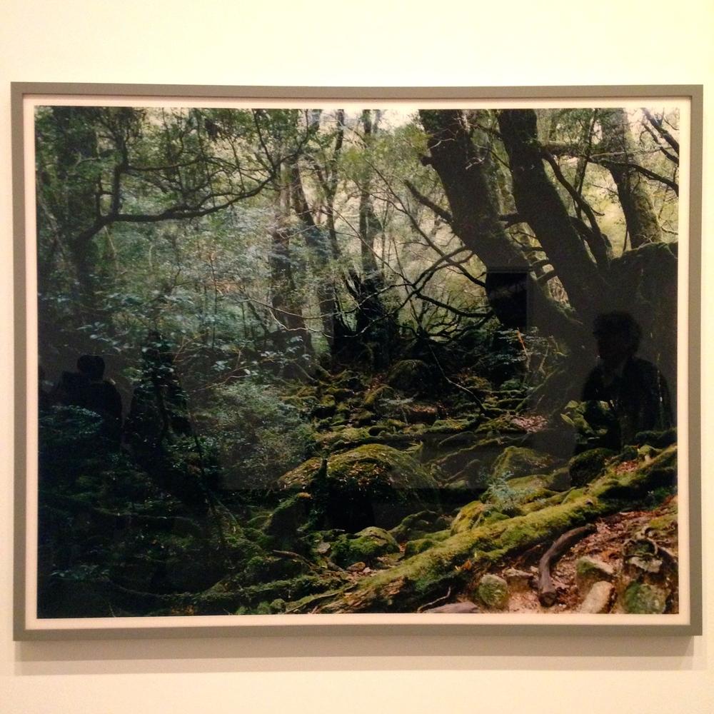 Thomas Struth, Paradise 13, Yakushima, Japan, 1999