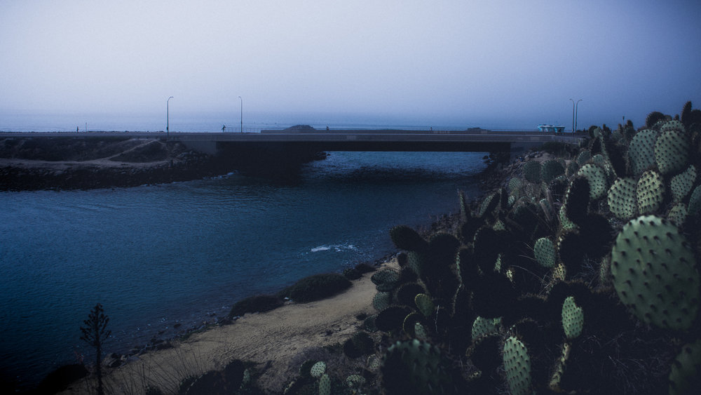 fog meets prickly pear cactus at the mouth of auga hedionda, carlsbad, ca 2.7.18