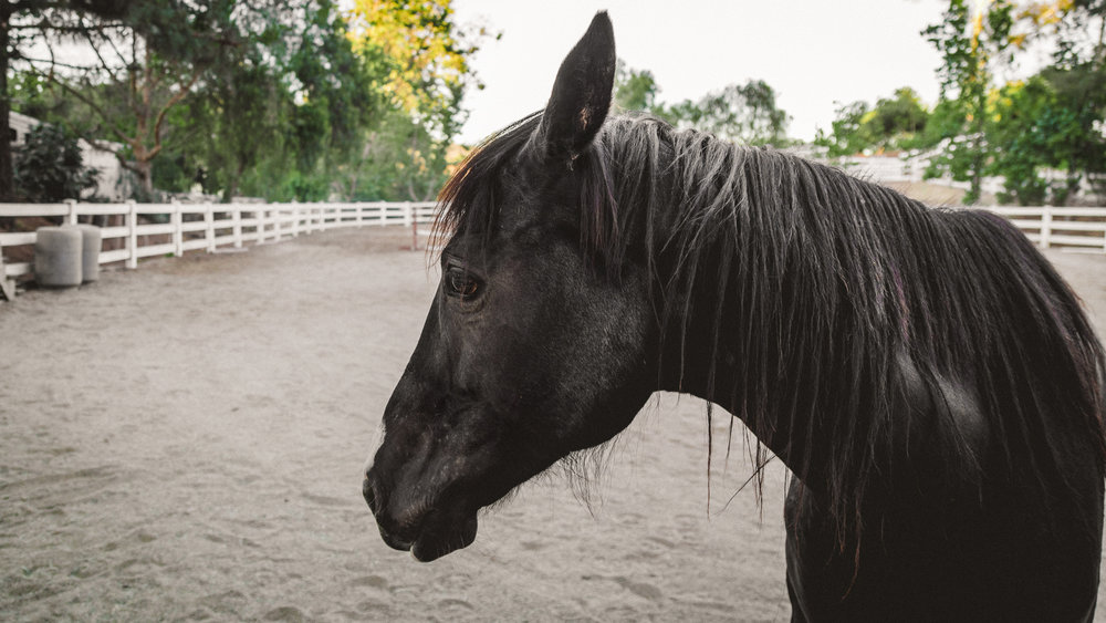 This is Honor and she's a seven year old Tennessee walker that we adopted last week... this is her shy face,she's not sure about the camera yet.