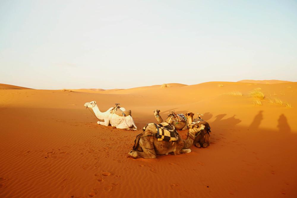 morocco (158 of 258).jpg