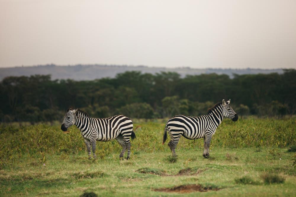 Kenya-26.jpg