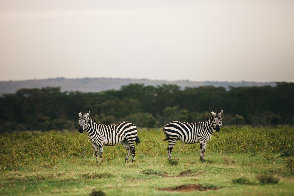 Kenya-27.jpg