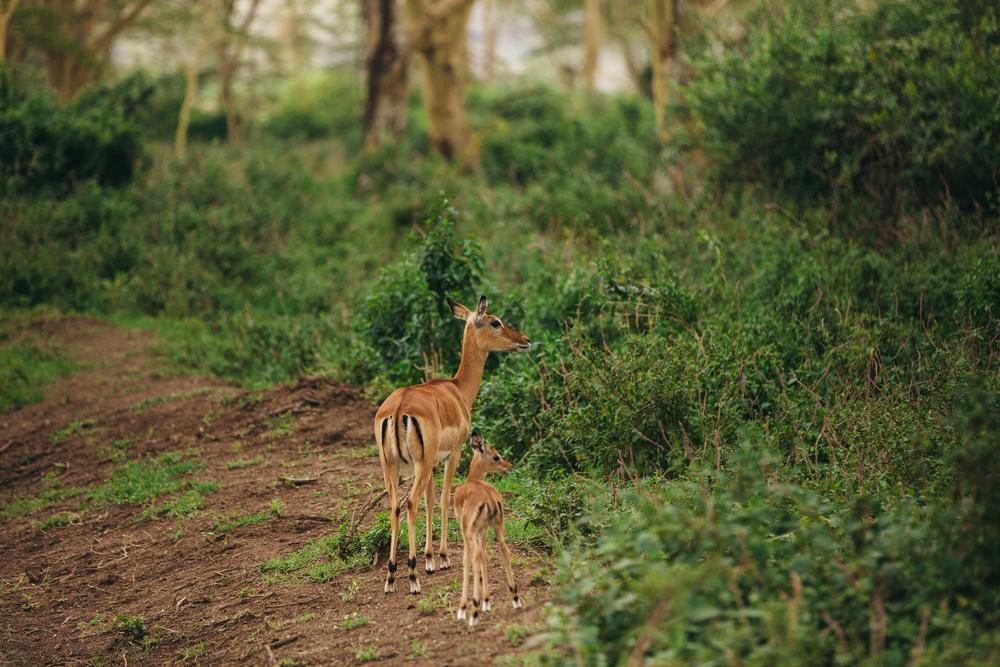 Kenya-34.jpg