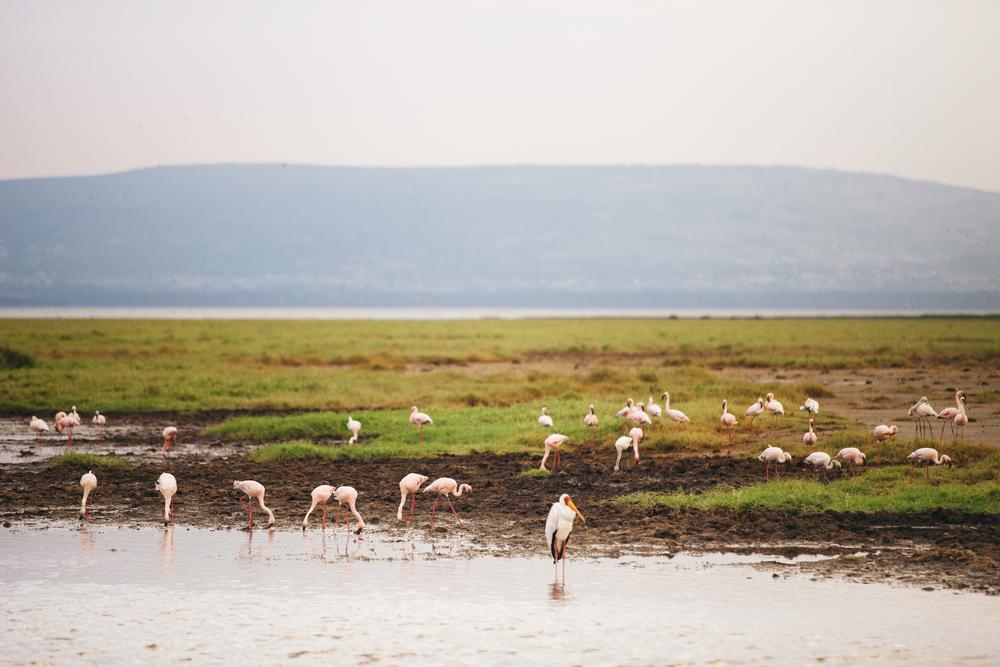 Kenya-48.jpg