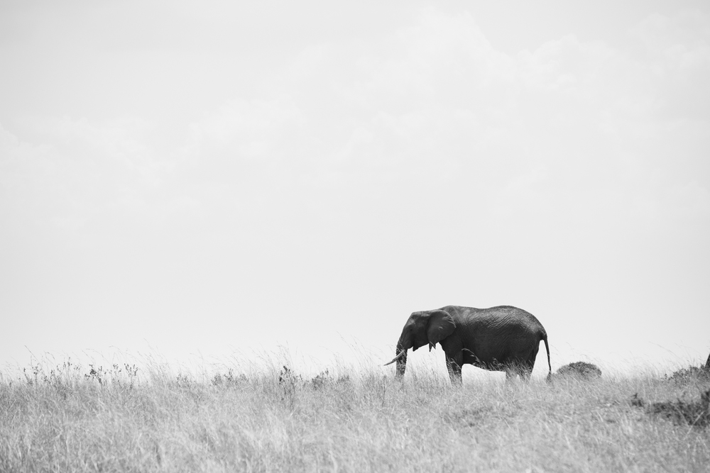 Kenya-66.jpg