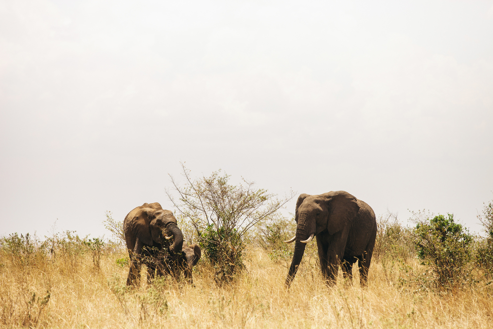 Kenya-67.jpg