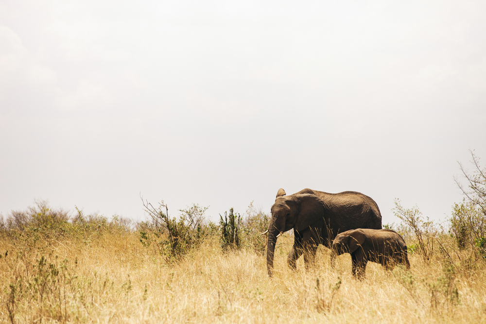 Kenya-68.jpg