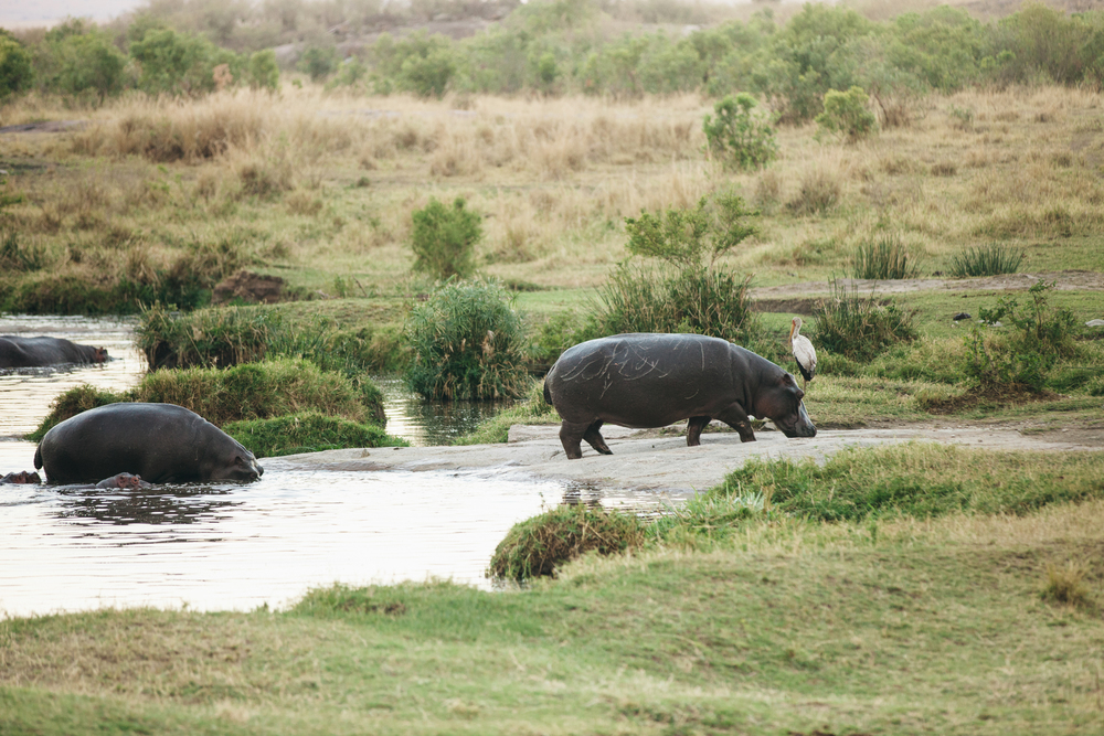 Kenya-80.jpg