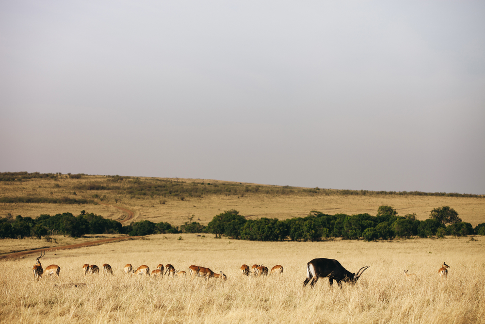 Kenya-83.jpg