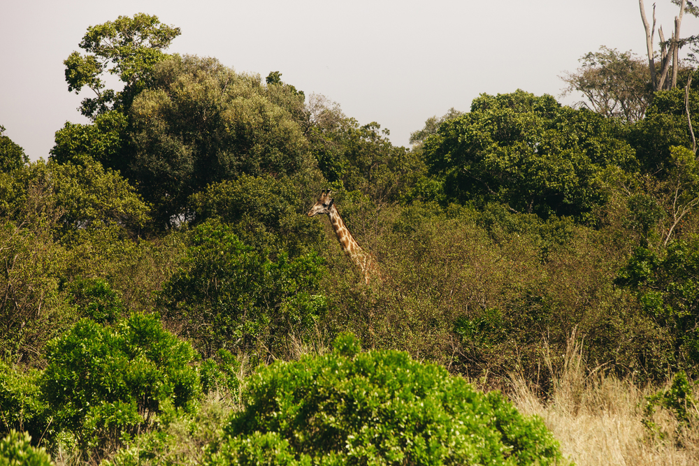 Kenya-92.jpg