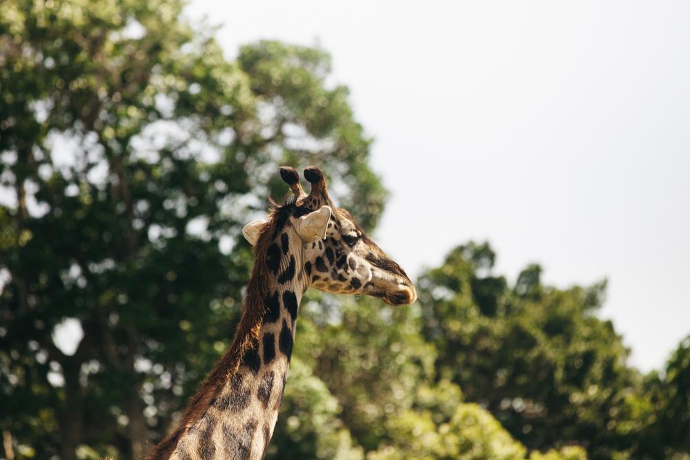 Kenya-95.jpg