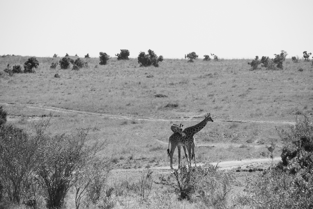 Kenya-97.jpg