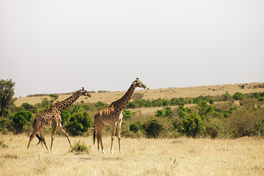 Kenya-96.jpg