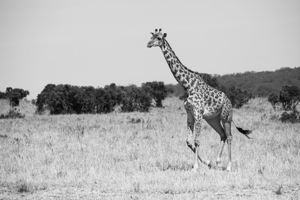 Kenya-99.jpg