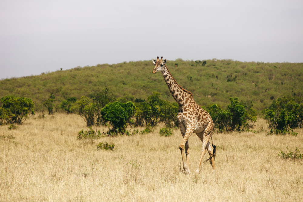 Kenya-98.jpg